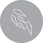 ikon_settefisk